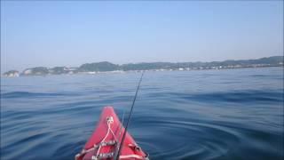 ー材木座沖で一時間試し釣りでキス3匹、メゴチ、べらが釣れる。今年は上...