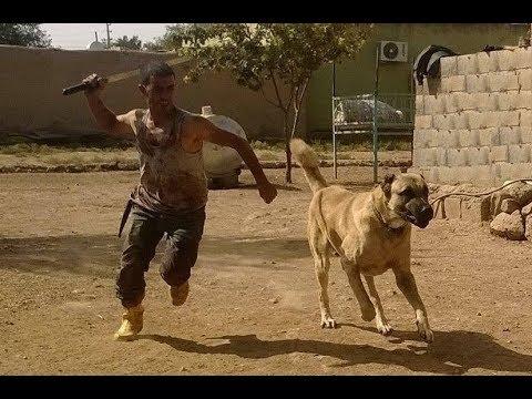 Savaş Köpeği Türk Aslanı - War Dog POWER