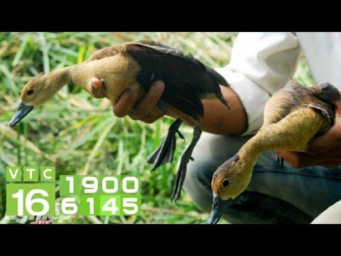 Nửa Triệu 1 Con Le Le, Nông Dân Lãi 300 Triệu đồng/năm | VTC16