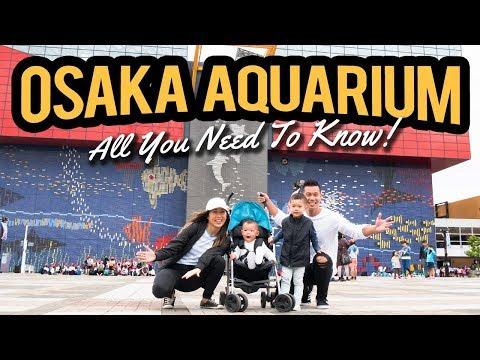 The Incredible Osaka Aquarium Kaiyukan! | Osaka Attractions