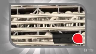 AYRAULT FRERES TRANSPORTS - Transport-animaux-vivants-bestiaux-betail