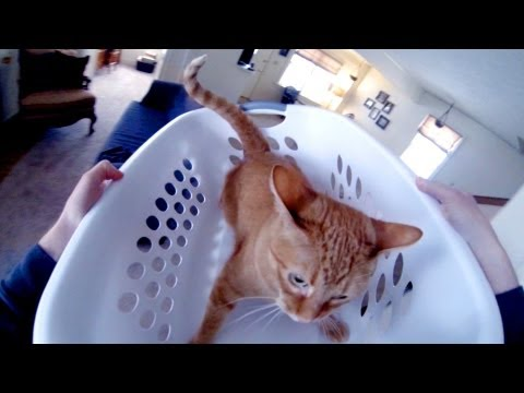 Cat Roller Coaster