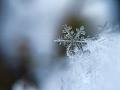 Airforce Samuelzone Snowflakes
