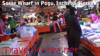 Sorae Pogu Fish Market in Incheon, Korea!
