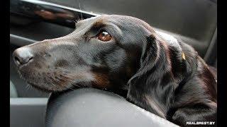 Собака-побрыгака шарик разрывака