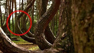 Most Mysterious And Magical Forests In The World