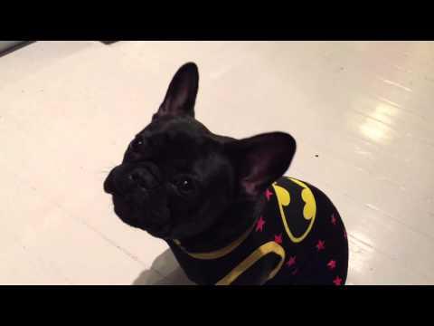 Feeding my Bat Dog