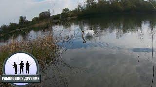 Нерест Плотви і Щука. Шевченківське озеро
