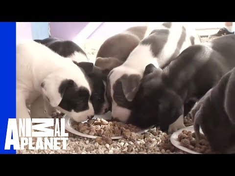 Producer S Take Heartbreak Is Part Of The Journey Pit Bulls And Parolees Youtube