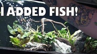 20g Rosy Loach and Sparkling Gourami aquarium