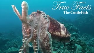 True Facts About The CuttleFish thumbnail