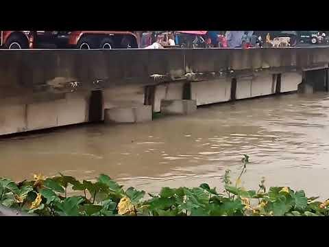 Flood, araria