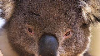 SUPER CUTE Australian Animals 4K!!