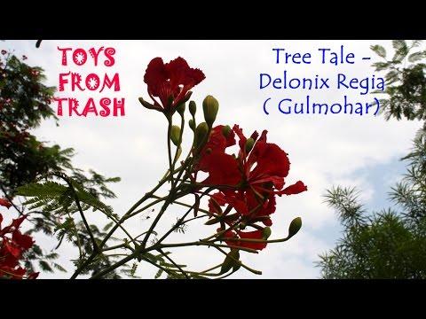 Tree Tale - Gulmohar - Delonix Regia | Hindi
