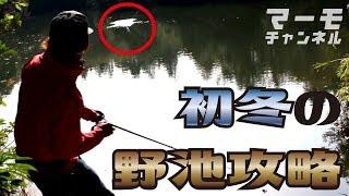 初冬の野池攻略【マーモチャンネル】