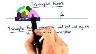 09 q Transcription Factors