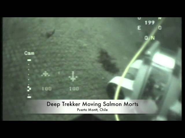 ROV Used in AquaCulture Net Inspection - Cage Aquaculture - Deep Trekker