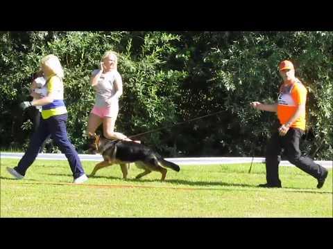 German Shepherd Specialty Show, Latvia