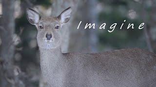 α:α7S IIIで捉える野生動物の世界【ソニー公式】