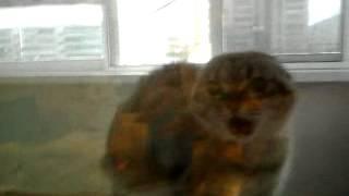 кошка звереет на балконе