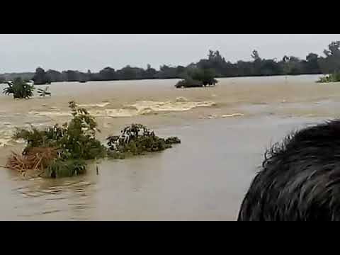 FLOOD NEWS || GORAKHPUR || PLEASE SUBSCRIBE || 18-08-2017 |||| RAPTI RIVER || Uttar Pradesh ||