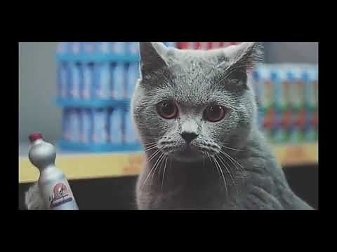 Коты захватили магазин, оригинал и наоборот.
