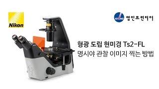 [에이프런티어] (Nikon) 형광도립 현미경으로 명시…