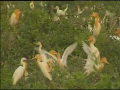 Văn hoá học - Tràm chim Đồng Tháp