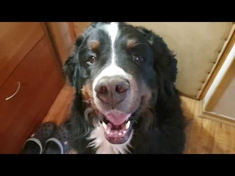 Экзема у собак лечение в домашних условиях