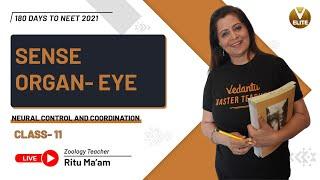 Neural Control and Coordination Class 11-L7 | Sense Organ- Eye | NEET 2021 | Vedantu NEET Elite
