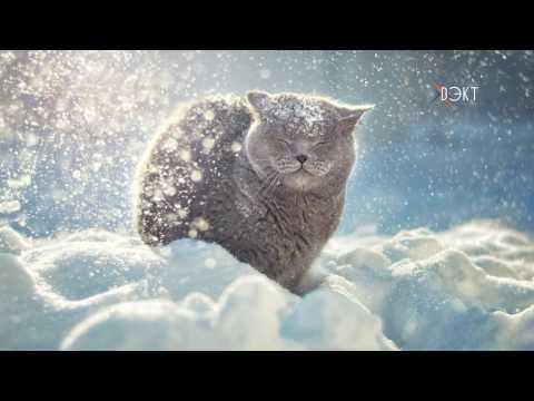 1 марта! Начало весны, всемирный день кошек и не только