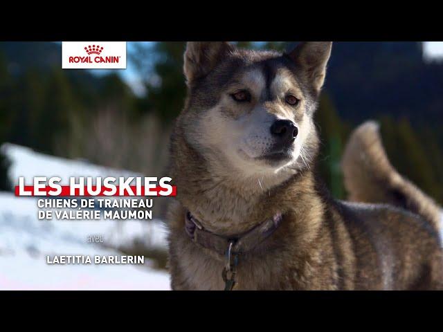 LES HUSKIES, chiens de traîneau de Valérie Maumon