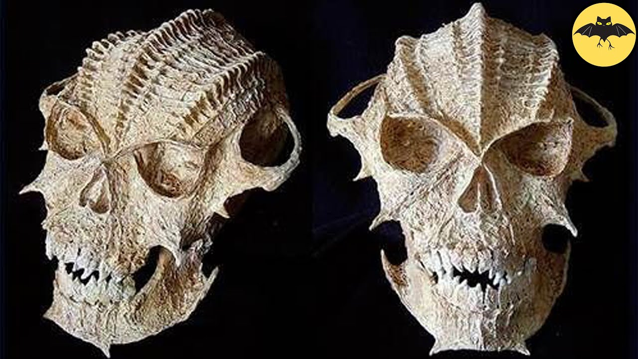7 Most Terrifying Skulls Discovered In The World.