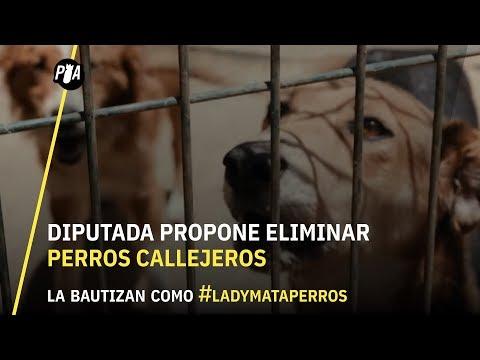 Diputada propone eliminar perros callejeros