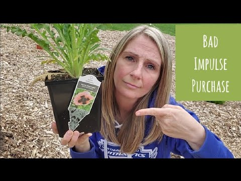 3 Gardening Mistakes I've Recently Made and HOW You Can Avoid Making Them Too
