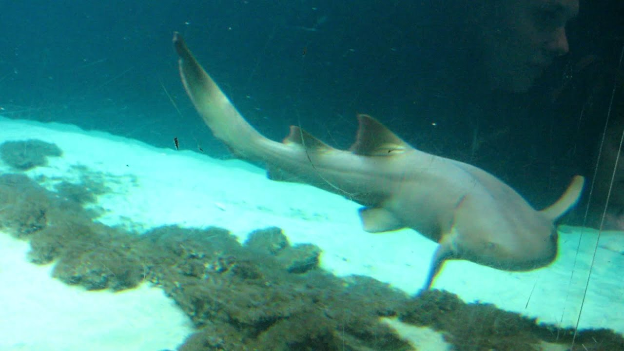 Fish aquarium in niagara falls - Ny Aquarium Shark Feeding