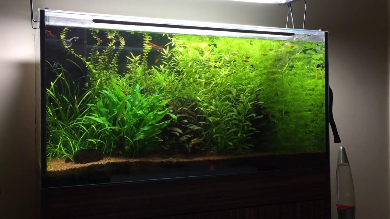 aquarium 160l