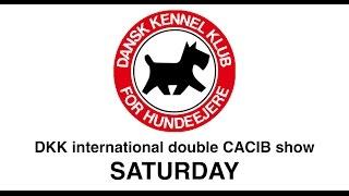 DKK - Double CACIB show - Saturday