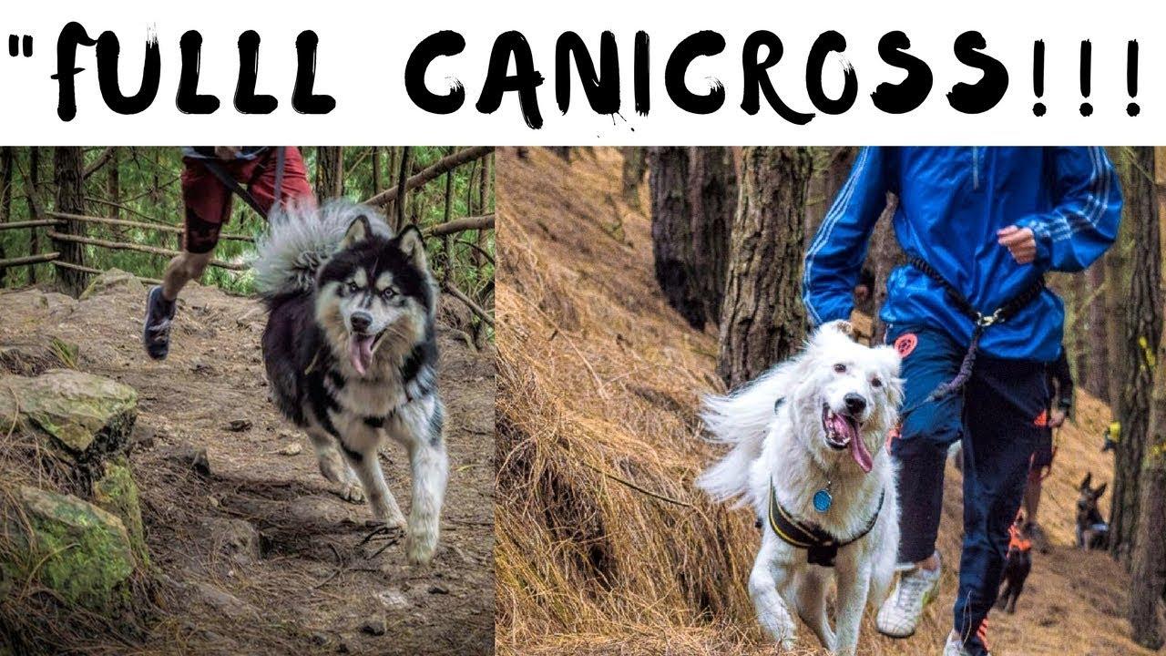 canicross fslc