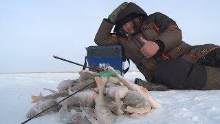 БАЛАНСИР. Как ловить окуня зимой? Зимняя рыбалка с Aikoland TV