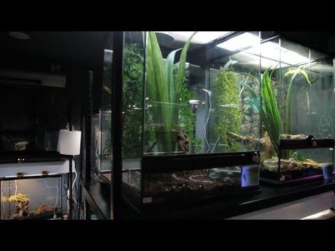 How to Clean a Snake Tank | Pet Snakes
