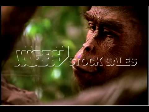 In Search of Human Origins