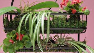 DIY Shower Plants | Glow