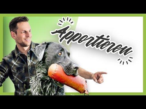 Wie du deinem Hund perfektes APPORTIEREN beibringst (Hundetraining Tutorial)