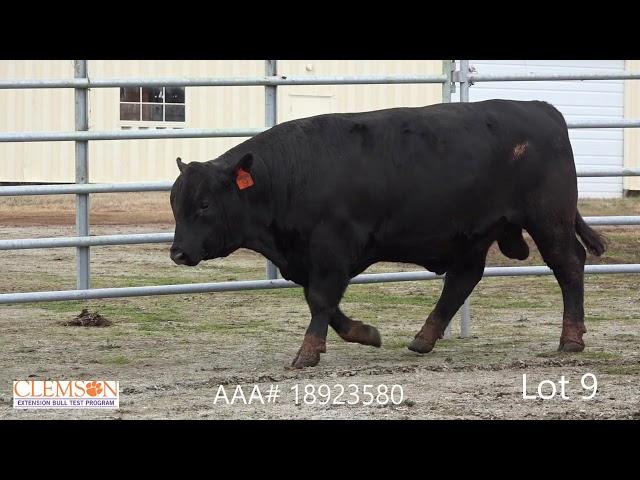 Clemson Extension Bull Test Lot 9