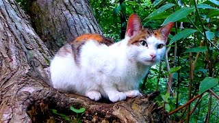Трехцветная Кошка. Красивая Трехцветная Кошка. Calico cat. Кошка на Дереве. Футажи для видеомонтажа