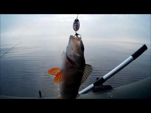 Рыбалка на Ладожском озере  ОКУНЕВОЕ ЭЛЬДОРАДО!!! Ловля окуня на спиннинг