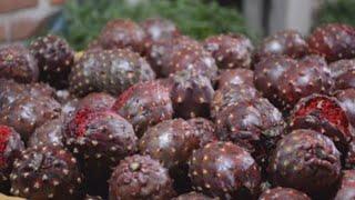 Gambar cover La pitaya, el exótico tesoro escarlata que nace en campos de Jalisco