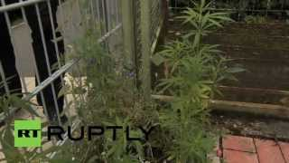 Germany: Seeds of change - activists plant weed around town