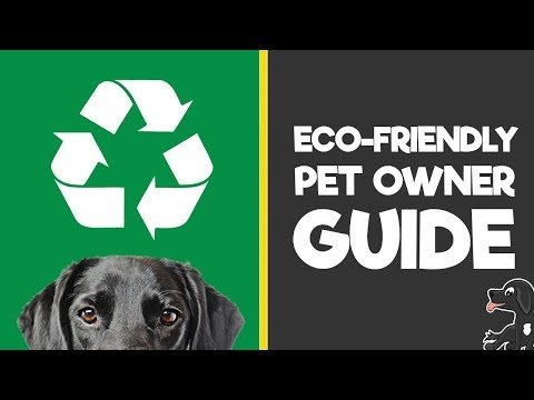 How to Be An Eco-Friendly Pet Owner (Environmentally Friendly Dog Tips)
